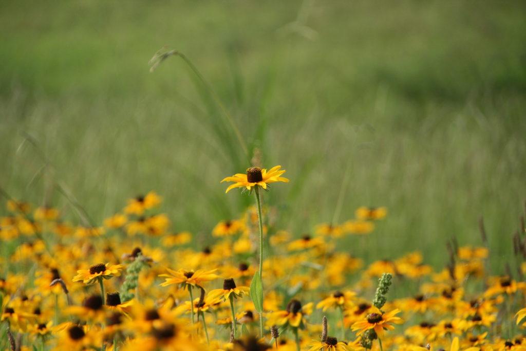夏のころ、河川敷に咲く名も知らぬ花