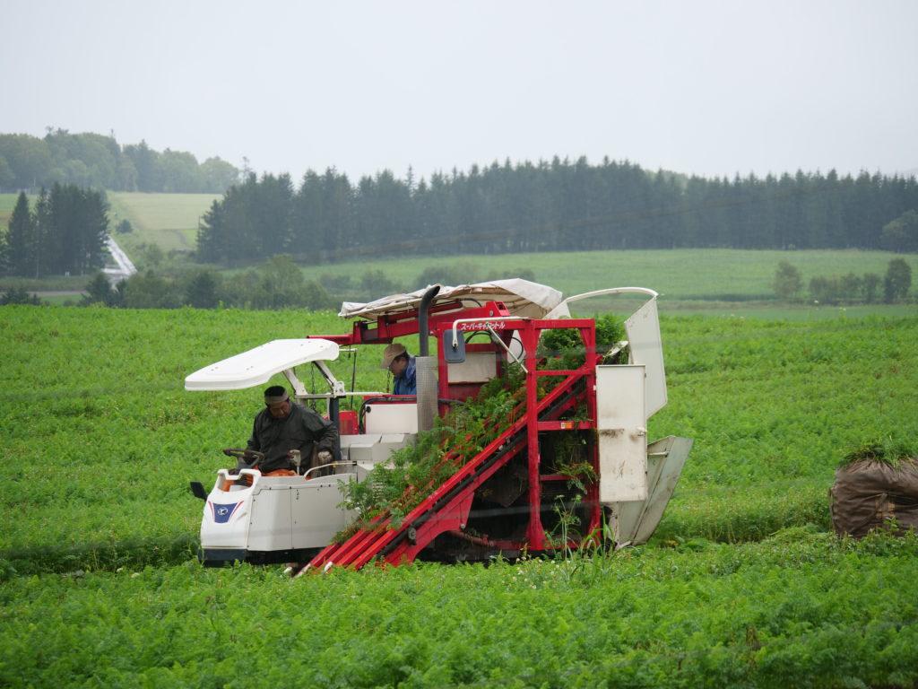 南富良野の農地 ニンジンの収穫作業