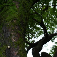 大木の蝸牛