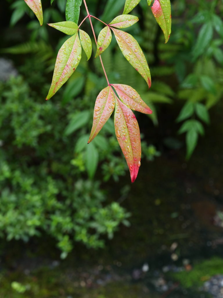 京都のお寺の庭