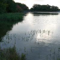 小幡緑地の池