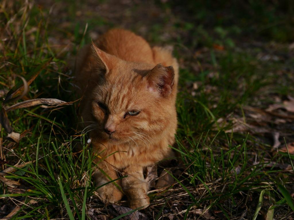 小幡緑地公園内の猫