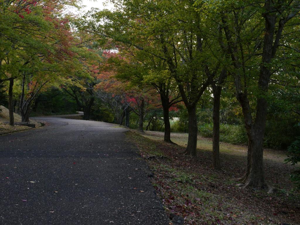 小幡緑地公園の雑木林の道
