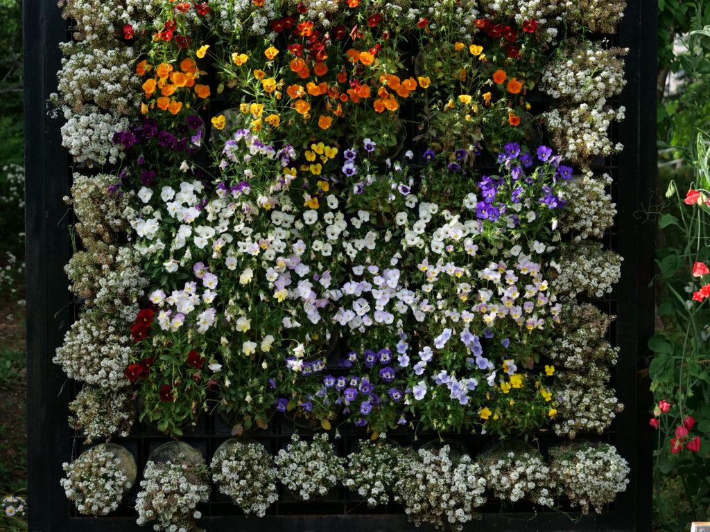 鶴舞公園の花壇
