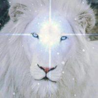 ライオンズゲート ライオン