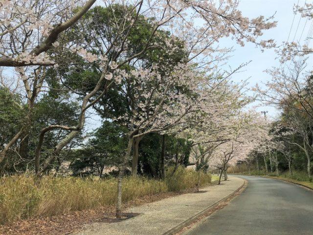桜の名所、滝頭(たきがしら)公園