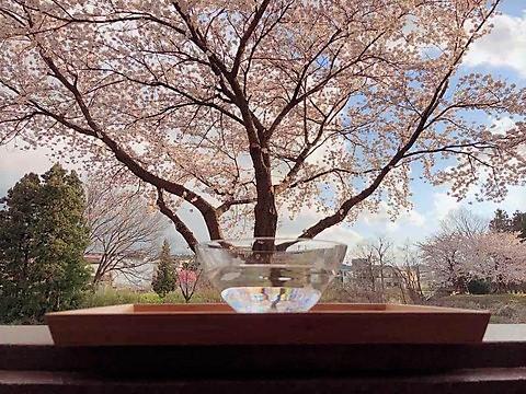 桜のエッセンス