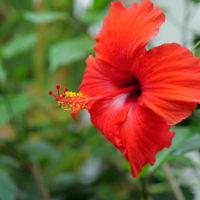 鶴間公園の花