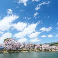 高遠の桜(六道の堤)