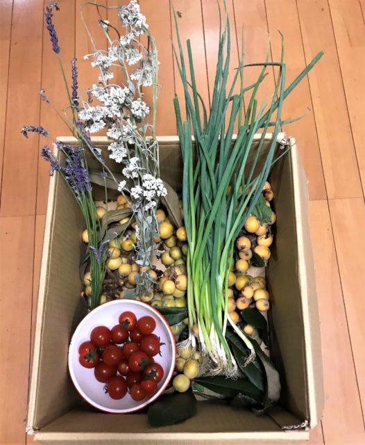 伊良湖で、いただいた野菜・琵琶・ハーブ