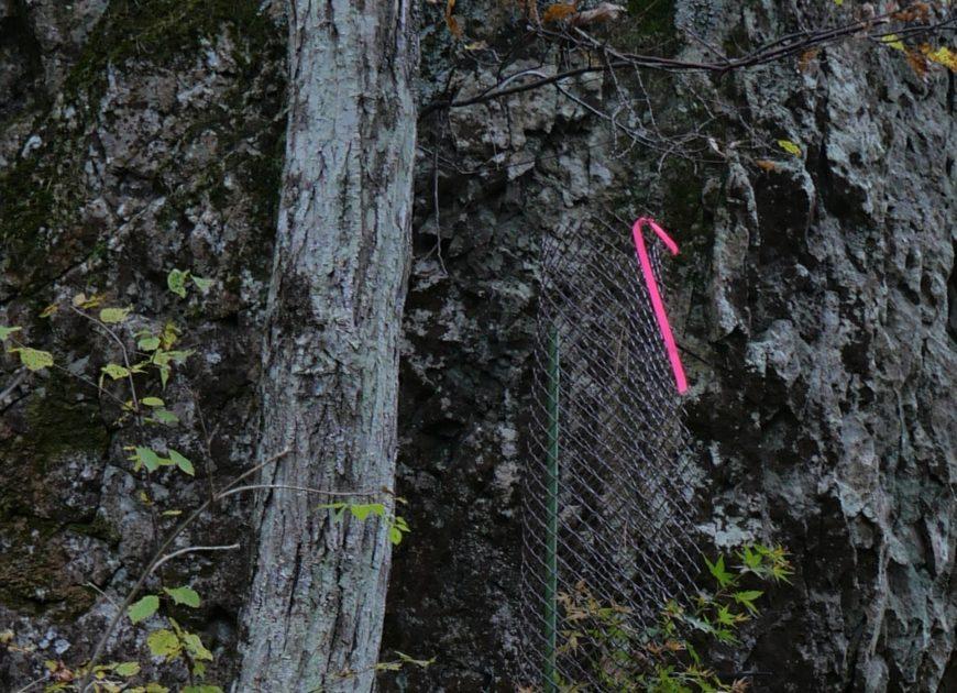 登山道のピンクの目印