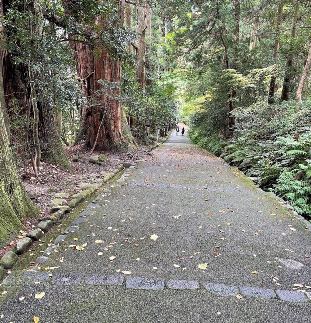 大きな杉の木の参道