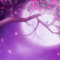 Pink Full Moon Tonight