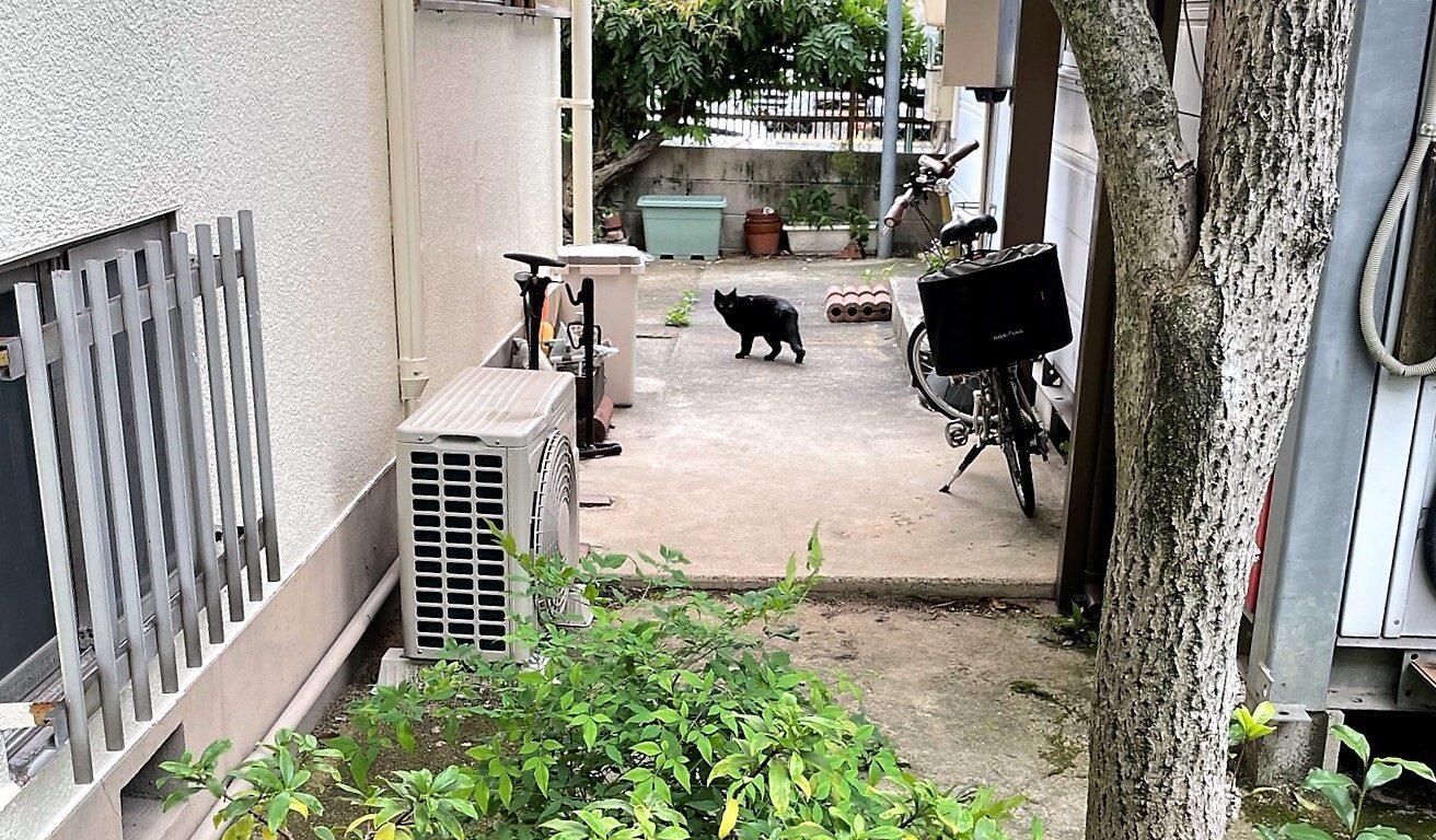 裏庭に来る黒猫さん