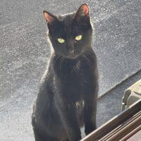 裏庭に餌をもらいに来る黒猫さん
