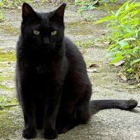 エジプトの女神バステトに似た黒猫さん